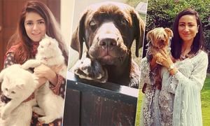 Pakistani Celebrities with their adorable pets