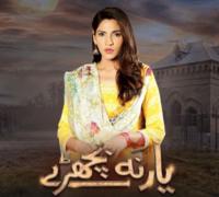 Zhalay Sarhadi Steals the Spotlight as 'Fiza' in Yaar Na Bichray!